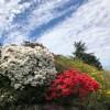 [美不勝收的春季加拿大溫哥華,與大自然共織的宜人居住環境] Vancouver, Canada 加拿大溫哥華