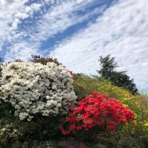 {公關教主于長君} 美不勝收的春季加拿大溫哥華,與大自然共織的宜人居住環境 Vancouver, Canada 加拿大溫哥華